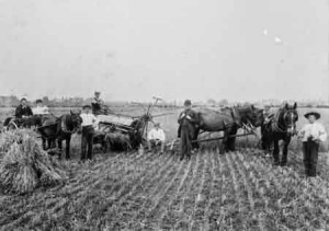 Farm Labour shortages began to show in 1915